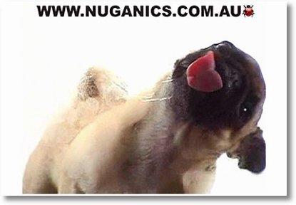 bildschirmschoner-leckender-hund