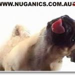 Leckender Hund – Bildschirmschoner kostenlos