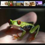 Photoalbum für Homepage erstellen – kostenlose Software